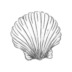 shell engraving. Panoramic ocean or sea beach view. Vector illustration of seaside with yacht and water waves. Black and white handmade drawing with calligraphic.