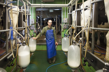 Portrait of dairy farmer milking cows with milking machines, Chilliwack, British Columbia, Canada