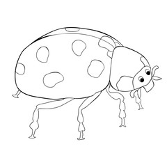 coloring  is ladybug insect nature. vector illustration