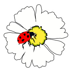 the is ladybug insect nature on daisy flower. vector illustration