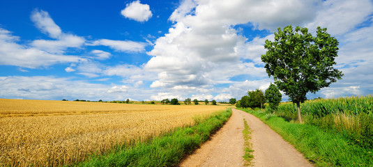 Wall Mural - Feldweg durch reife Felder, Landschaft im Sommer, blauer Himmel mit Wolken