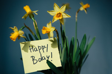 Happy birthday - text and yellow narcissus flowers on blue background
