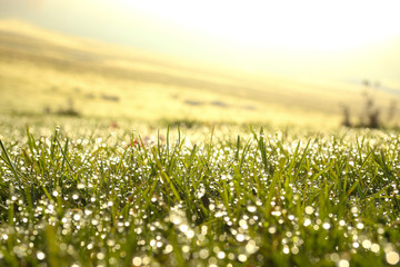 dew Drops of water on grass in the morning light