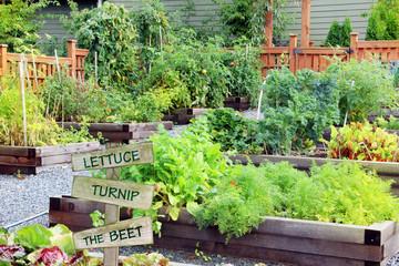 Grandma's fruit and vegetable garden.