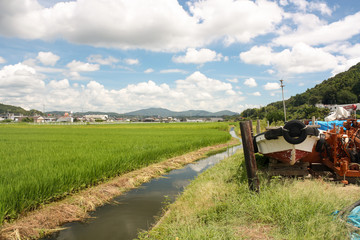 Okayama Rice Fields, Japan
