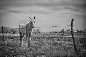 Horse 3570