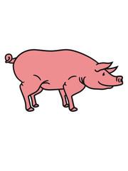 schwein seitlich süß niedlich comic cartoon lachen clipart