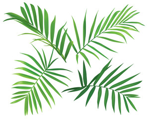 Tropical palm leaves on white background. Vector set of exotic tropical garden for wedding invitations, greeting card and fashion design.