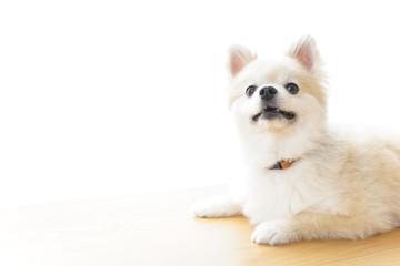 リラックスする犬