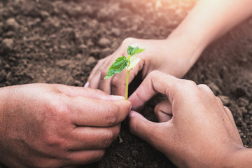 Wall Mural - concept eco hand helping planting young tree in garden