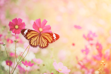 Orange butterfly on the cosmos flower field, vintage color, hipster color