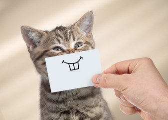 funny cat with smile on cardboard Wall mural