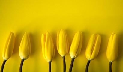 Yellow Fresh Spring Tulips Flowers Concept Woman's day Greeting Card Mother's Day Valentines Yellow Background Natural Light Selective Focus