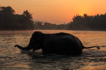 Elephants take a bath in Kwae-noi river. Kanchanaburi, Thailand