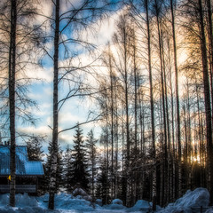 Winter landscape - house is in the woods at sunset