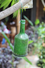 bottle in hanging on tree branch, make decoration, isolated.