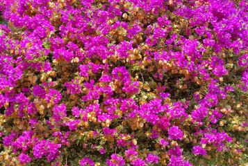 flower, flowers, nature, pink, garden, plant, purple, summer, spring, blossom, green, bloom, flora, floral, violet, beauty, field, color, bright, petal, blooming, gardening, colorful, wild, leaf,backg