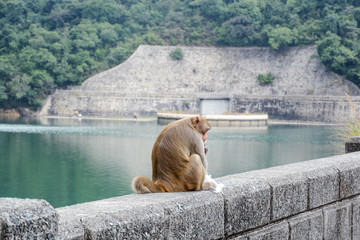 monkeys on the edge of the lake