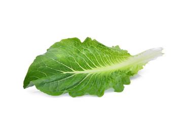 fresh baby cos,lettuce leaf isolated on white background