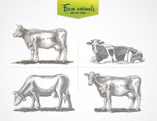 Cows in graphic style, a set of  vector illustration of four images