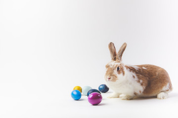 Easter eggs painted in different colors and rabbit, easter concept