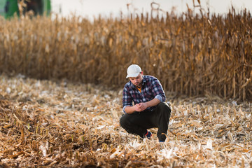Young farmer examine corn in corn field during harvest