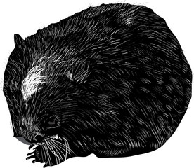 wombat sketch isolated on white
