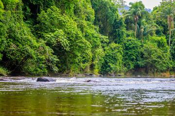 The beautiful nature of Surinam