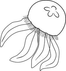 Coloring jellyfishes or Aurelia aurita