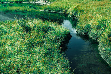 A quiet brook in the green grass