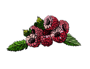 Hand drawn colored sketch raspberry on white background. Vector illustration of berries