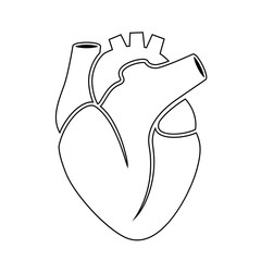Outline icon of human heart anatomy