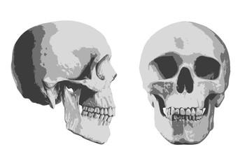 tête de mort - mort - crâne - squelette - face - profil - symbole - tête - horreur - médical - crime