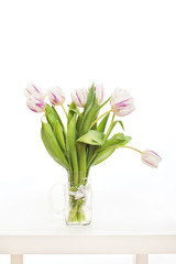 spring flowers on a white background in the studio. tulips