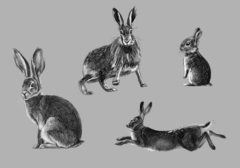 Black and white freehand sketch of wild rabbit