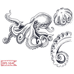 Vector illustration sketch - octopus. Hand drawn sketsh card menu seafood restaurant.