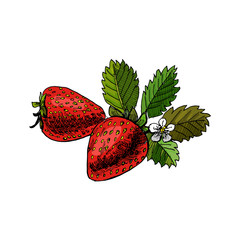 Hand drawn colored sketch with two strawberry isolated on white background. Vector illustration&