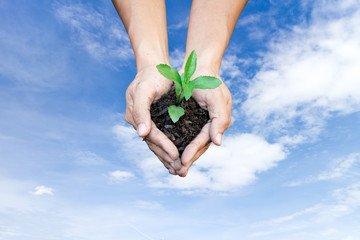Ecology concept human hands holding big plant tree with on sky background environment day