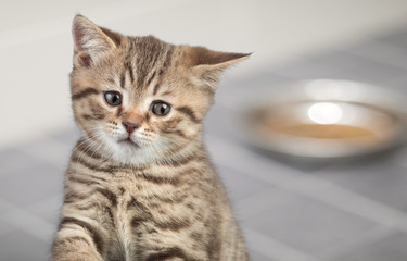 Sad young cat sitting near food bowl