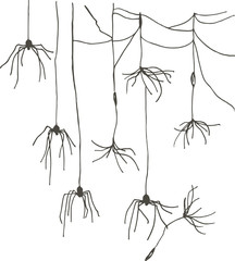 Spiders that look like dandelion seeds. Masking spiders.
