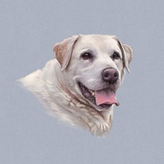 Portrait of Great Pyrenees. Pyrenean mountain dog isolated on the gray background. Art Animal collection: Giant Dog Breeds. Hand Painted Illustration of Pet. Good for banner, T-shirt, card