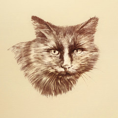 Cat Face. Realistic pastel drawing of a brown cat looking at camera. Good for print T-shirt. Animal collection. Hand painted illustration. Design template. Art background, banner, cover for pet shop