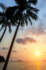 Palm trees on a tropical sea beach during amazing sunset.