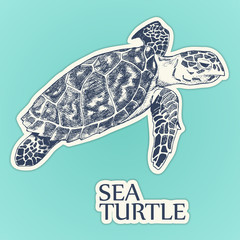 Sea turtle sticker vector. hand drawn illustration