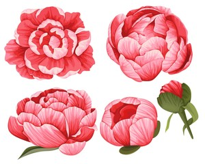 Peony Vector Clip Art Set of 5 Red beautiful Flowers image