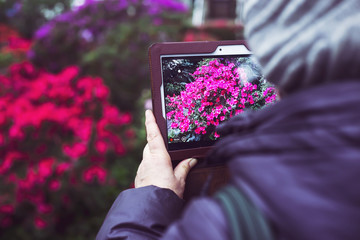 An elderly woman takes pictures of flowers in a greenhouse on her tablet