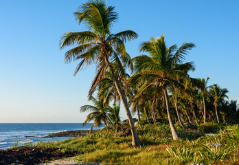 Palm trees on tropical shore.