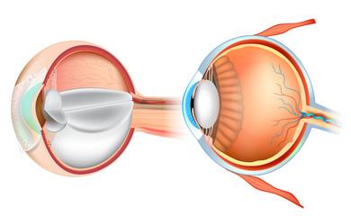 Eye Anatomy Illustration. Cross section of human eye.