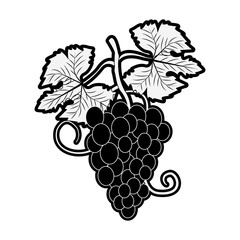 Grapes fruit symbol icon vector illustration graphic design