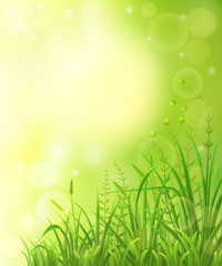 Green meadow background with grass